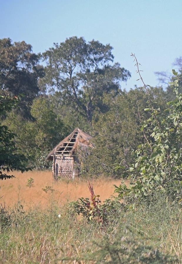 GEDEELTELIJK GRAS DIE OP EEN LANDELIJKE HUT IN BOTSWANA BEHANDELEN stock fotografie