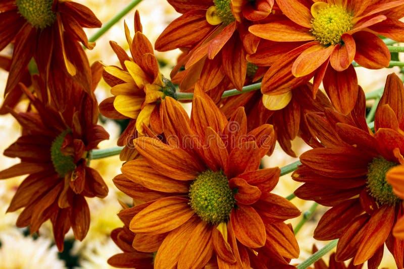 Gedeocuteerde botanische achtergrond, oranje florale afdekplaatje, sluiting oranje bloembouquet stock afbeelding