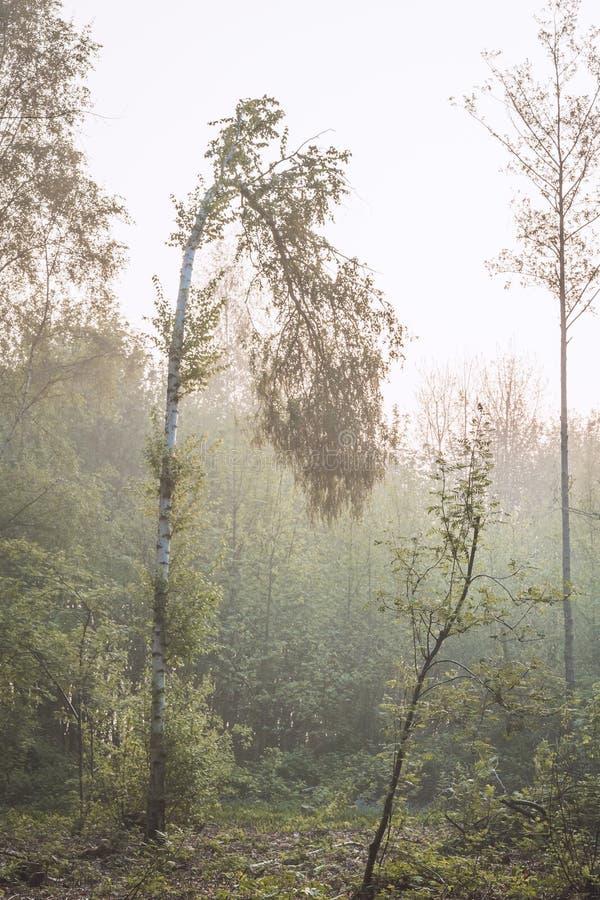 Gedeprimeerde boom stock foto