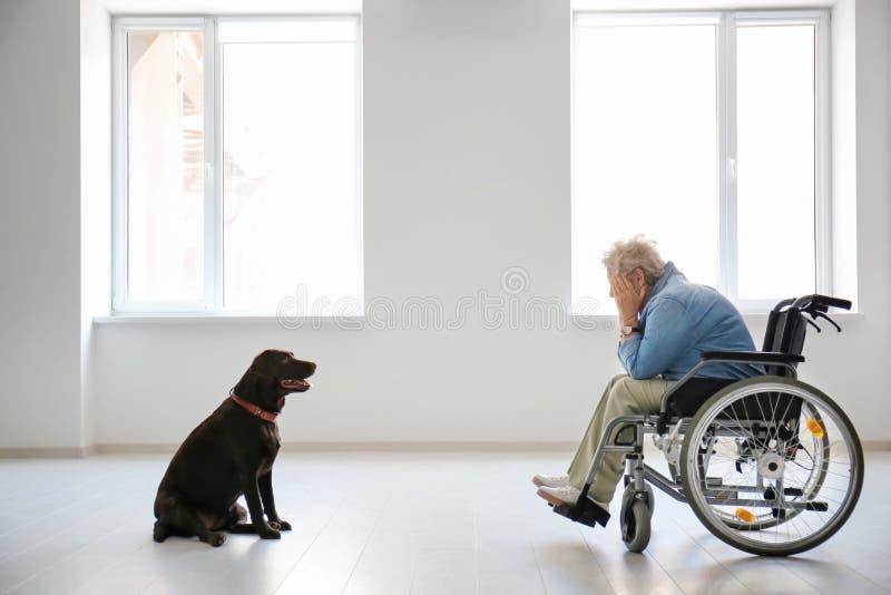 Gedeprimeerde hogere vrouw in rolstoel en haar hond binnen stock afbeeldingen