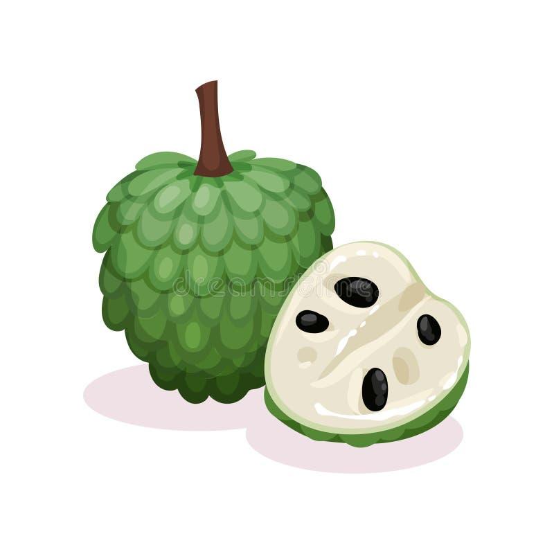 Gedetailleerd vlak vectorontwerp van geheel en de helft van rijpe cherimoya Exotisch Fruit Zonnebloemzaden - zaadfonds Vla Apple stock illustratie