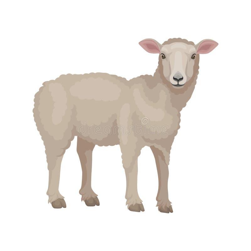 Gedetailleerd vlak vectorontwerp van jong lam, zijaanzicht Schapen met beige wollaag Huisdier Veehouderij stock illustratie