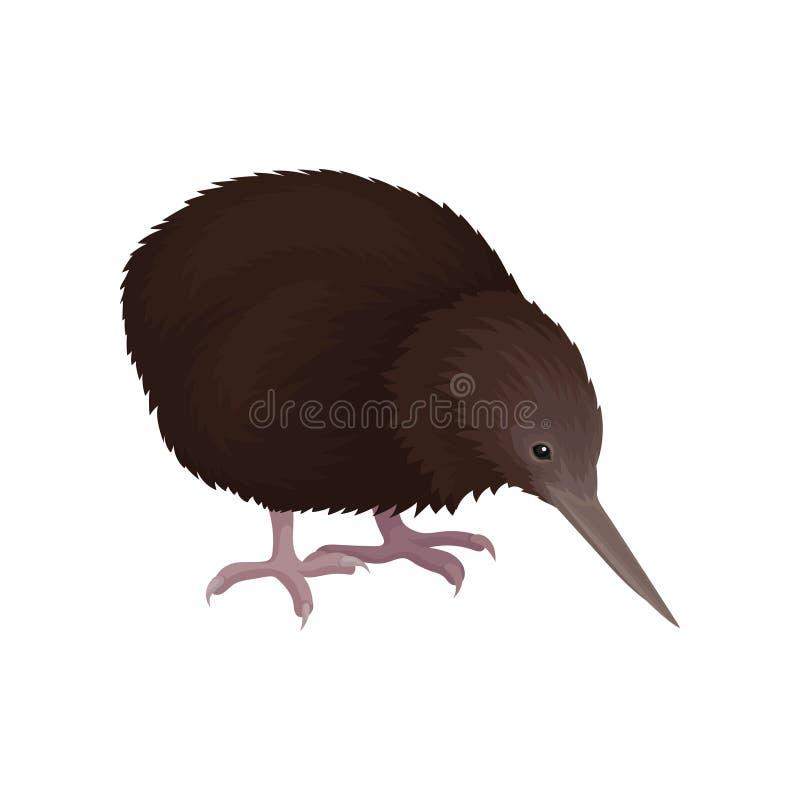 Gedetailleerd vlak vectorpictogram van kiwivogel Wild Australisch dier met lange bek, bruine veren en korte benen wildlife royalty-vrije illustratie