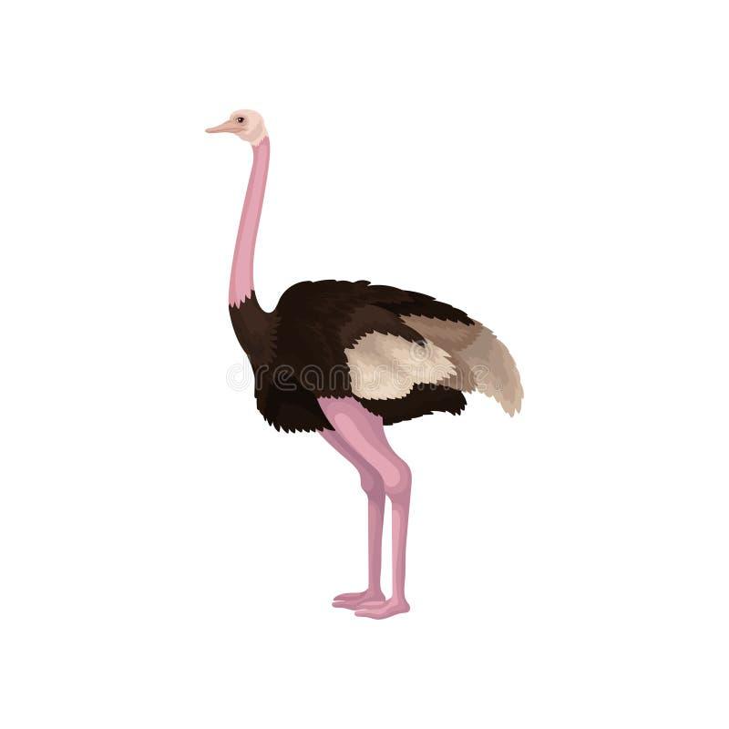 Gedetailleerd vlak vectorpictogram van struisvogel, zijaanzicht Grote flightless Australische vogel met lange roze hals en benen royalty-vrije illustratie