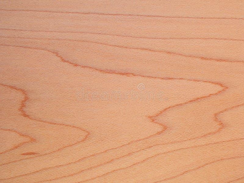 Gedetailleerde beuktextuur als natuurlijke houten achtergrond stock afbeeldingen