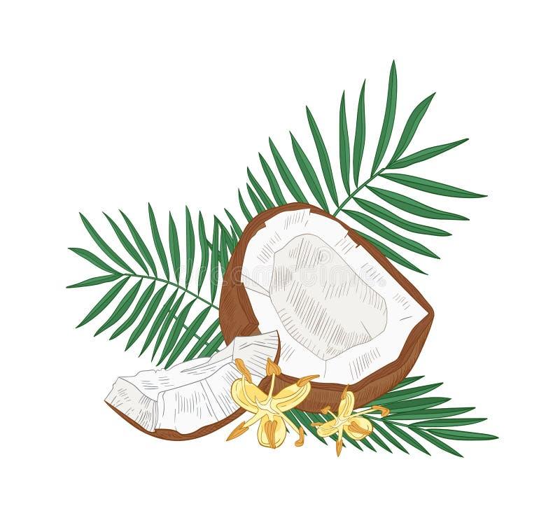 Gedetailleerde botanische tekening van gebarsten kokosnoot, palmbladeren en bloemen die op witte achtergrond wordt geïsoleerd Eet stock illustratie