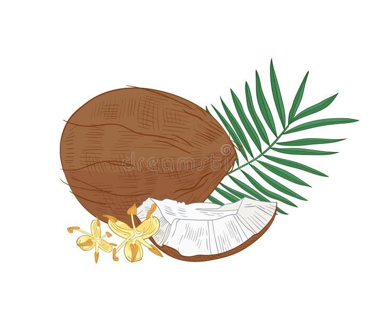 Gedetailleerde botanische tekening van kokosnoot, palmgebladerte en bloeiende bloemen die op witte achtergrond wordt geïsoleerd n royalty-vrije illustratie
