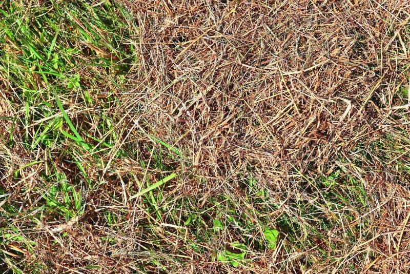Gedetailleerde dichte omhooggaande die oppervlakte van stro en hooi op een landbouwbedrijf wordt gezien stock afbeelding