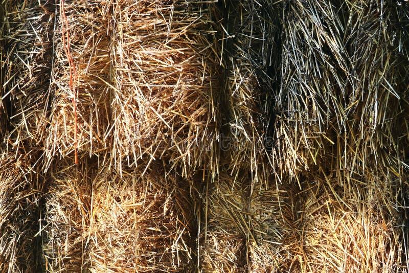 Gedetailleerde dichte omhooggaande die oppervlakte van stro en hooi op een landbouwbedrijf wordt gezien stock fotografie
