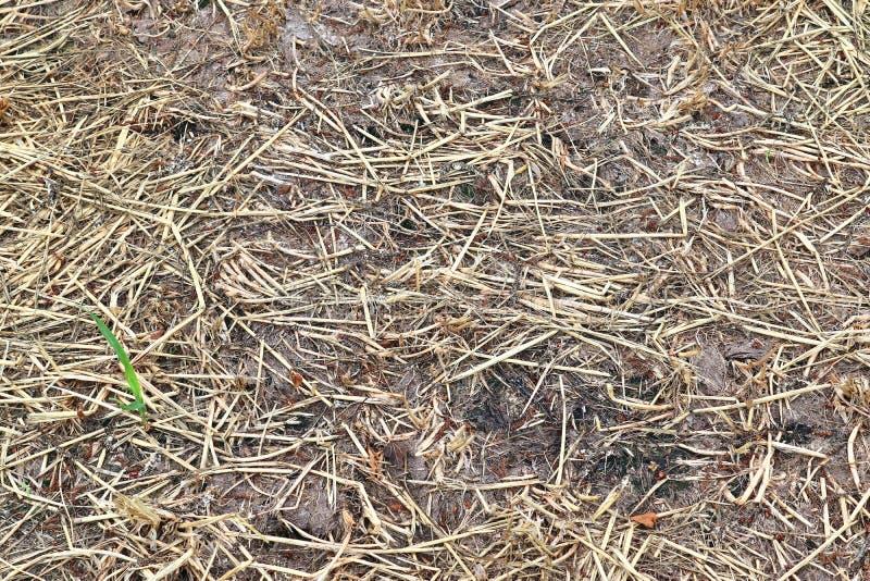 Gedetailleerde dichte omhooggaande die oppervlakte van stro en hooi op een landbouwbedrijf wordt gezien royalty-vrije stock afbeelding