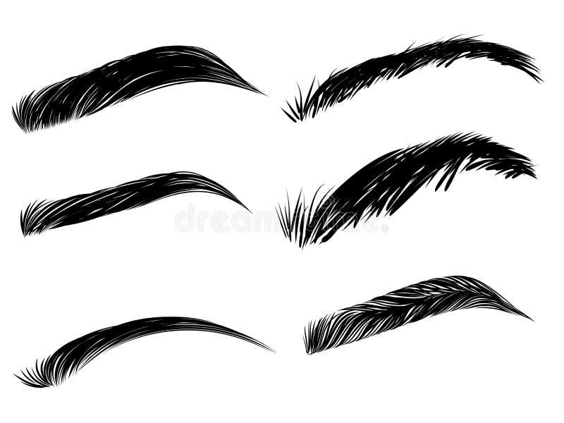 Gedetailleerde geplaatste wenkbrauwen vector illustratie