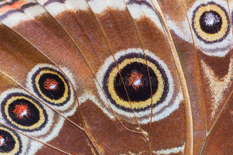 Gedetailleerde macro van tropische vlindervleugel royalty-vrije stock foto's