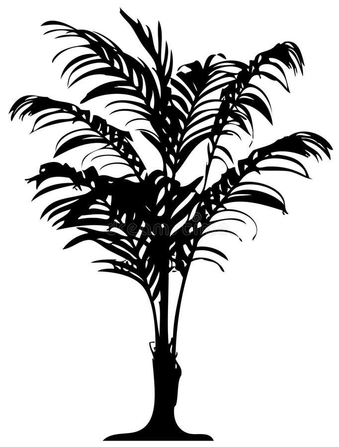 Gedetailleerde palm royalty-vrije illustratie
