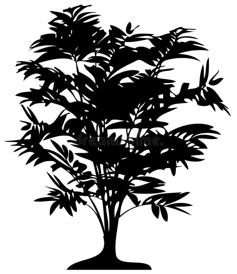 Gedetailleerde palm stock illustratie