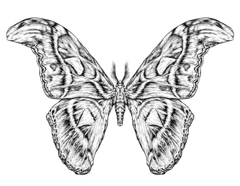 Gedetailleerde realistische schets van een vlinder/een mot stock illustratie