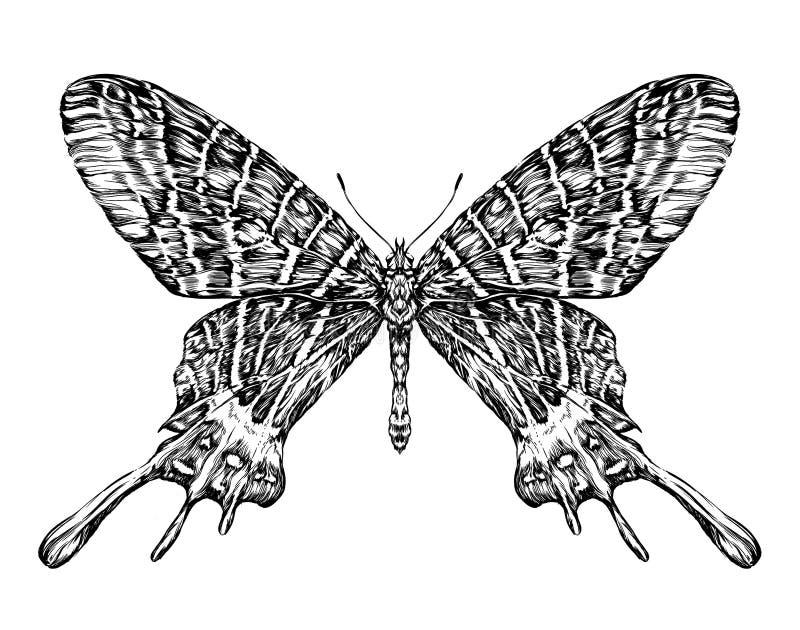 Gedetailleerde realistische schets van een vlindermot royalty-vrije illustratie