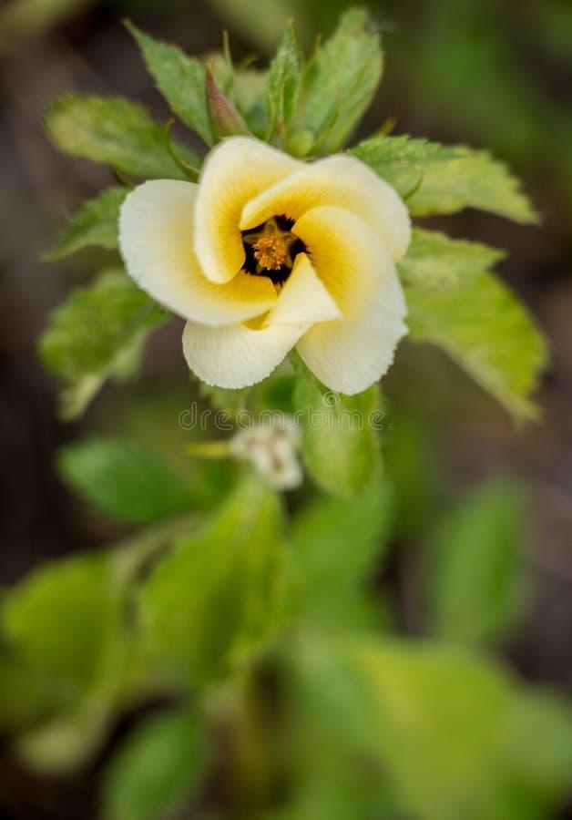 Gedetailleerde witte en gele bloem in het bos royalty-vrije stock afbeelding