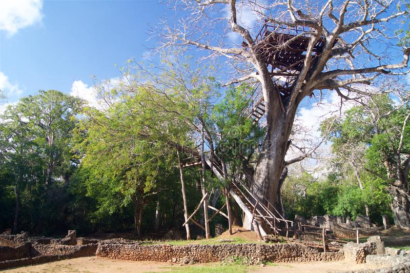 Gedi Ruins Kenya Africa Observation Tower royalty free stock images