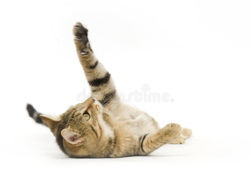 Gedreht Kätzchen stockfotos