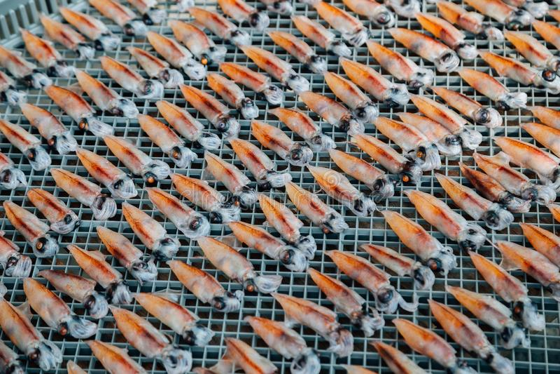 Gedroogde kleine inktvissen in het dorp Kinosaki Onsen in Hyogo, Japan royalty-vrije stock afbeelding