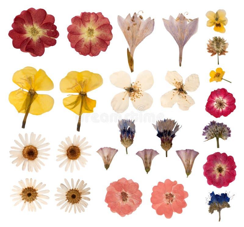 Gedrukte bloemen stock afbeelding