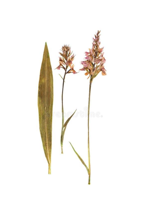 Gedrukte en droge bladeren, twee bloemen van orchideeën royalty-vrije stock foto