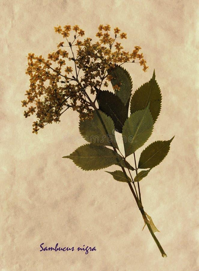 Gedrukte en droge bloemen van Europese ouder royalty-vrije stock fotografie
