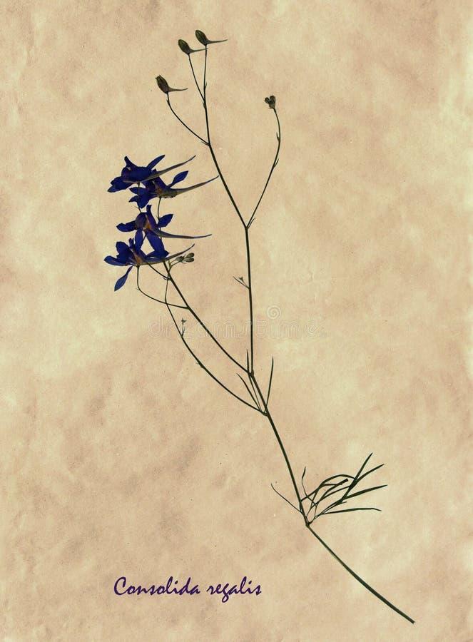Gedrukte en droge bloemen van het Vertakken zich Ridderspoor stock fotografie