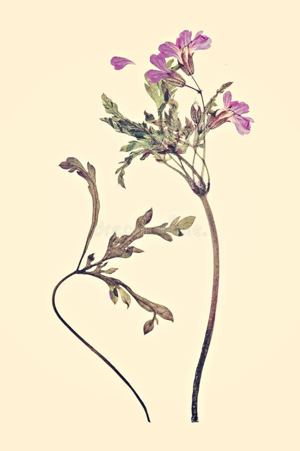 Gedrukte en droge bloemenachtergrond royalty-vrije stock foto