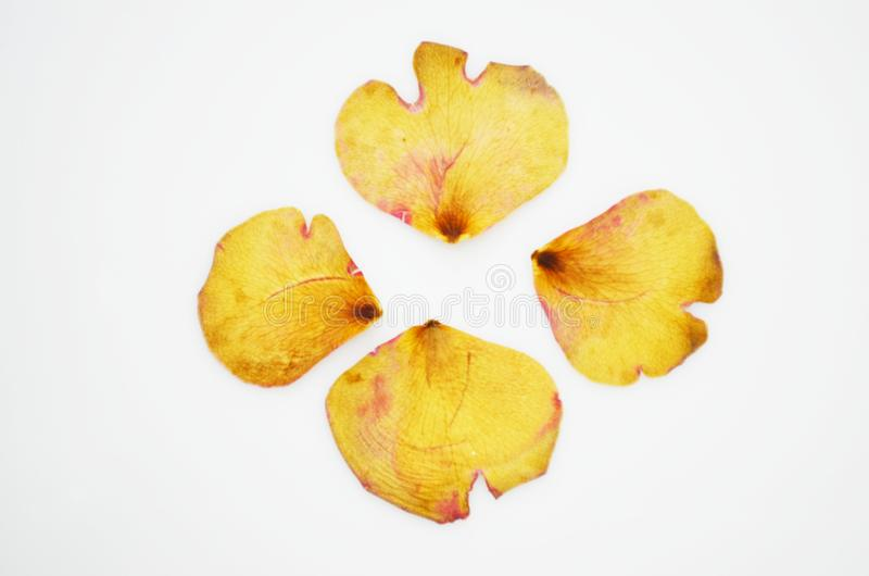Gedrukte en droge gevoelige bloemblaadjes van roze bloemen royalty-vrije stock afbeelding