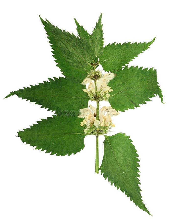 Gedrukte en droge stamnetel met bloemen royalty-vrije stock afbeeldingen