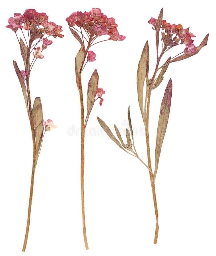 Gedrukte geïsoleerde bloemen, royalty-vrije illustratie