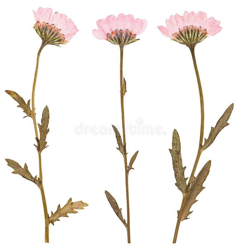 Gedrukte geïsoleerde bloemen, stock foto's
