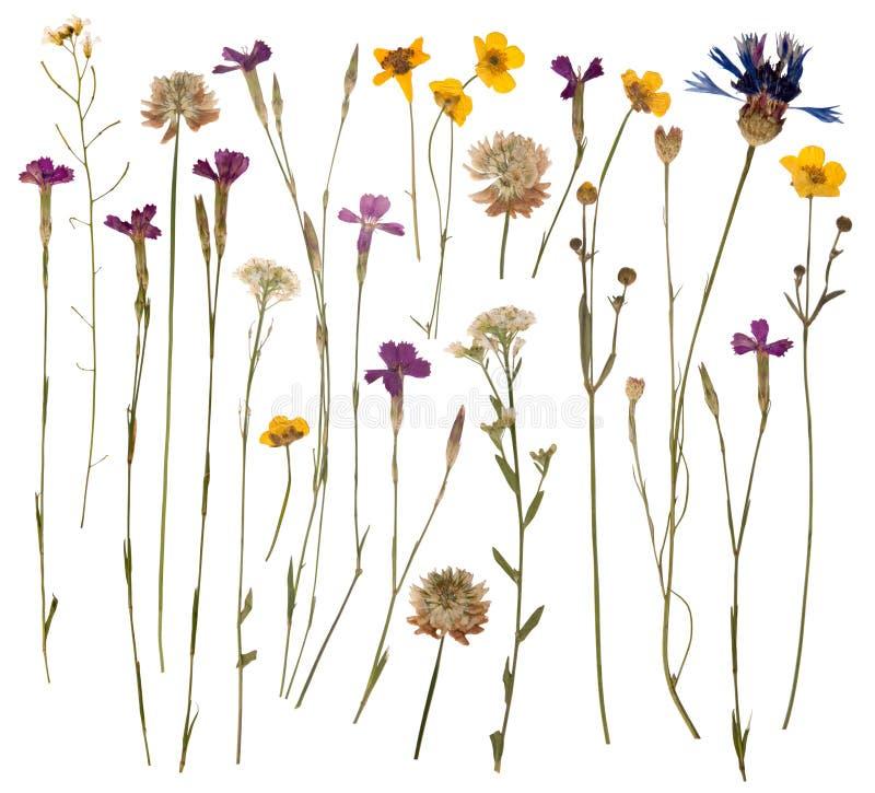 Gedrukte wilde bloemen stock foto