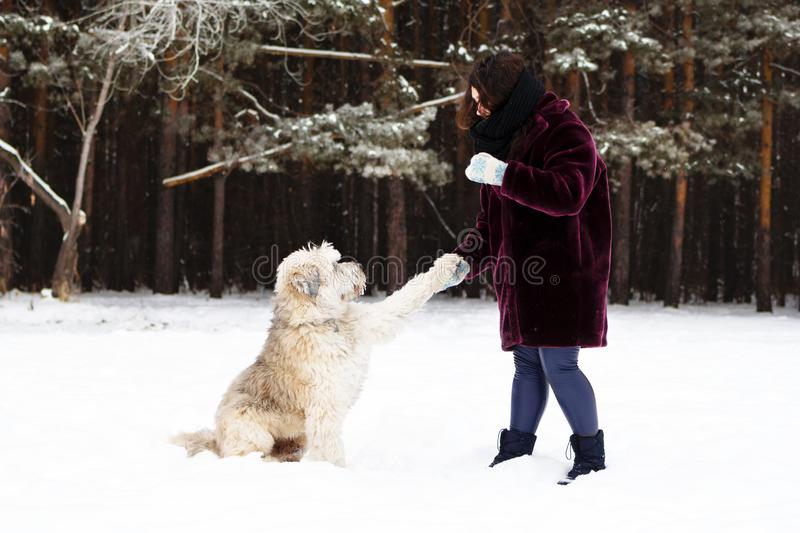 Geeft de zuiden Russische Herder Dog een poot zijn eigenaar op een achtergrond van de winterbos royalty-vrije stock fotografie
