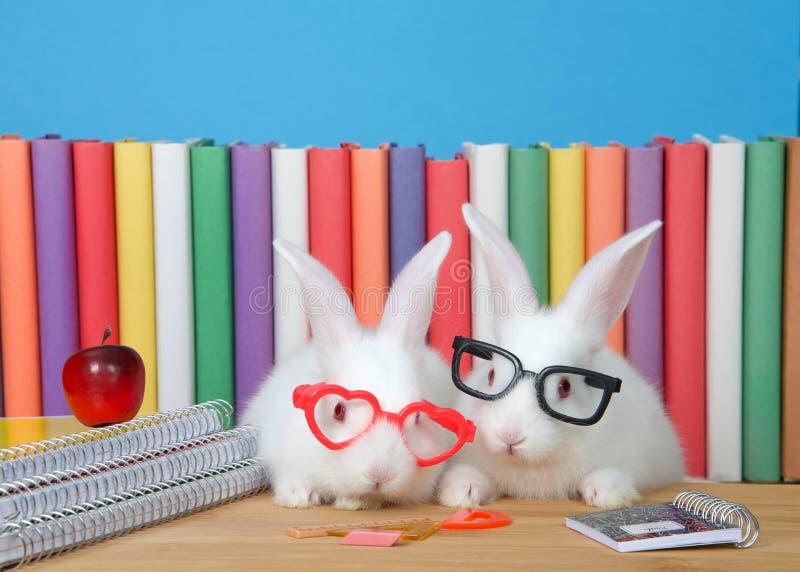 Geeky de volta aos coelhos da escola que vestem vidros imagens de stock royalty free