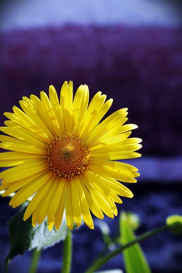 geel stock foto