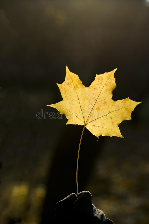 Geel blad stock afbeeldingen