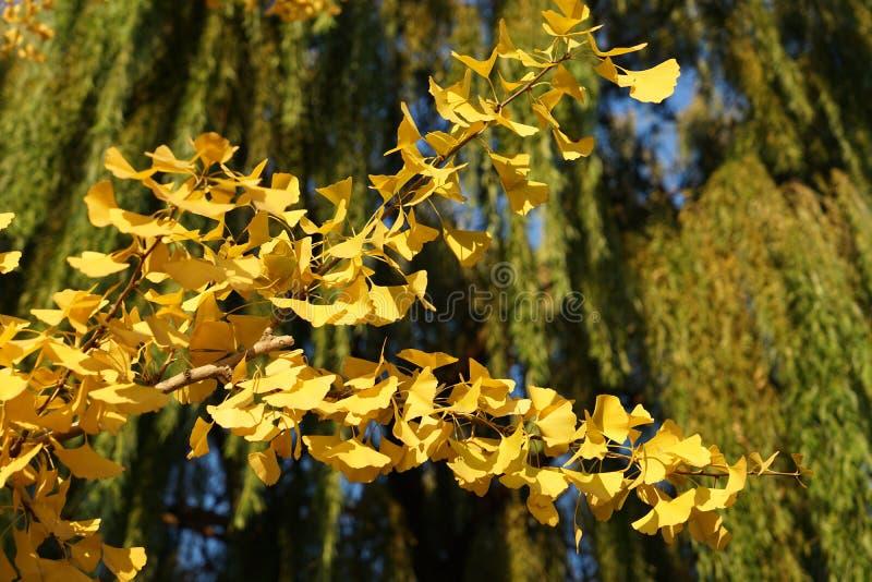 Geel blad in daling royalty-vrije stock afbeelding