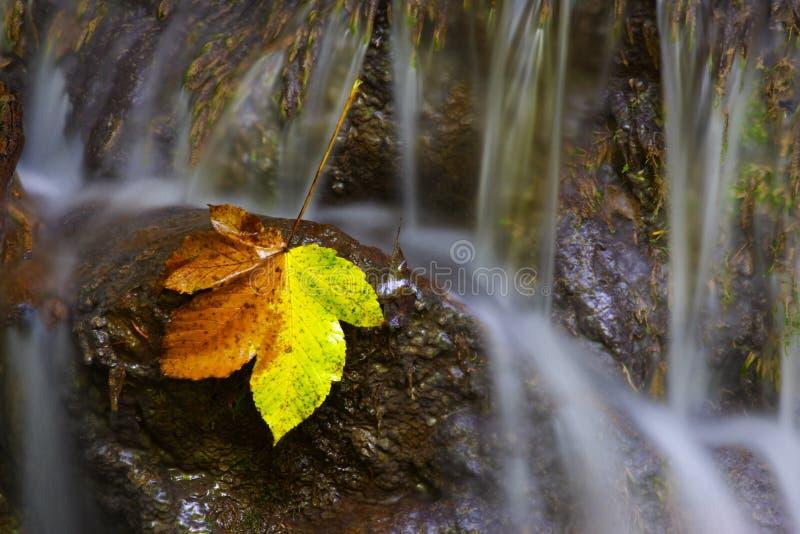 Geel blad op de rivier stock foto's