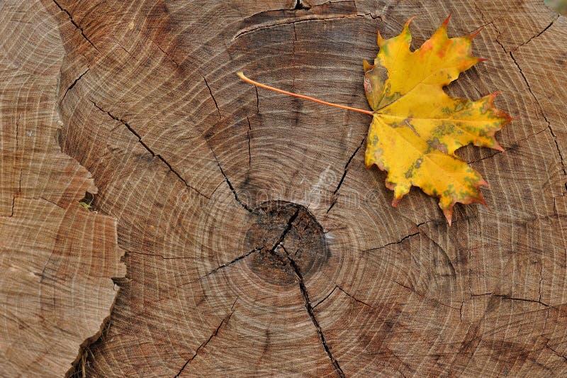 Geel blad op een felled boomstomp stock fotografie