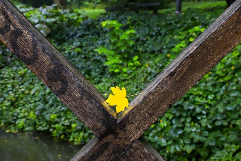 Geel blad op een omheining van een brug over een kleine rivier in een de herfstpark De daling van het blad royalty-vrije stock fotografie