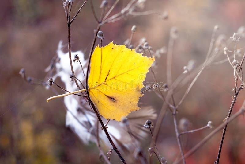 Geel blad van berk onder stammen van droog gras De herfstdag in royalty-vrije stock afbeeldingen