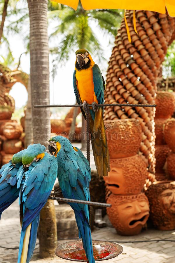 Geel-blauwe papegaaien royalty-vrije stock afbeeldingen