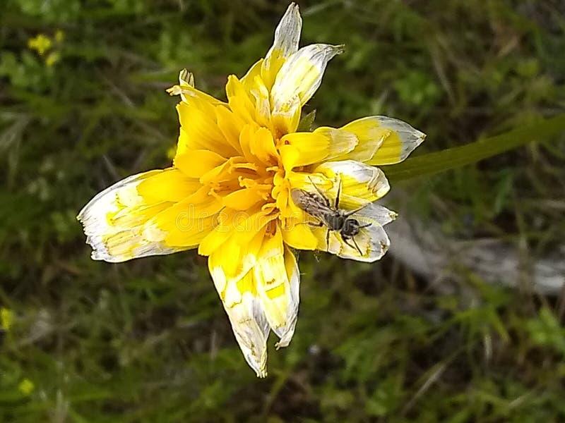 Geel bloem fadding insect B royalty-vrije stock fotografie