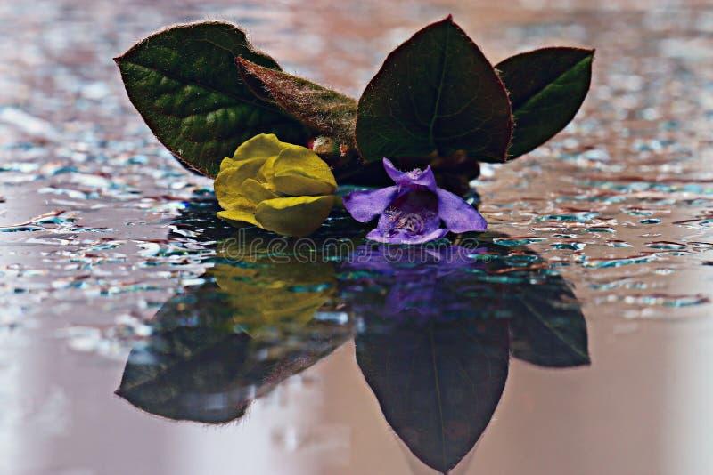 Geel bloemen weerspiegeld nevelwater royalty-vrije stock foto