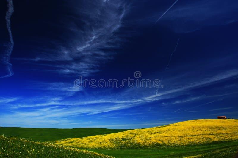 Geel bloemgebied met duidelijke donkerblauwe hemel, Toscanië, Italië stock afbeelding
