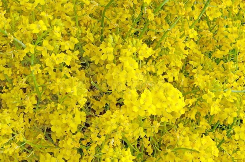 Geel bloemtapijt royalty-vrije stock foto's