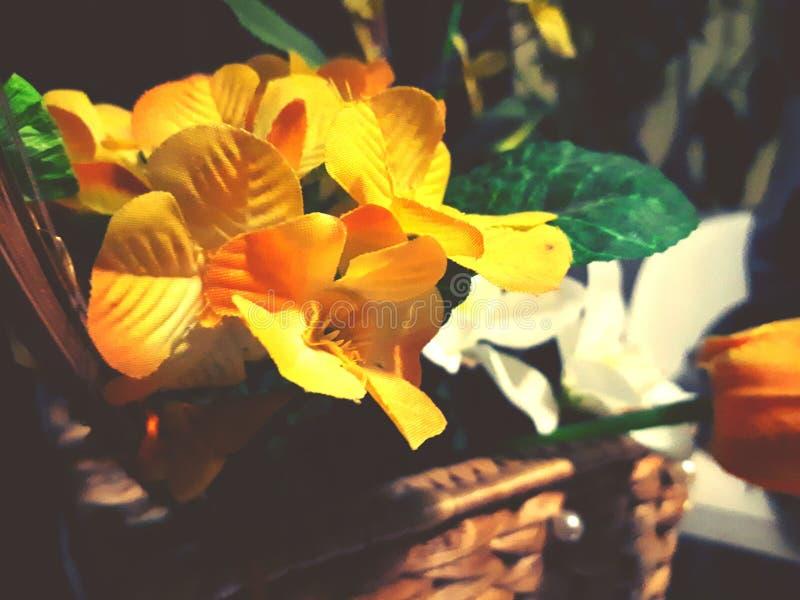 Geel bloemtempo stock foto