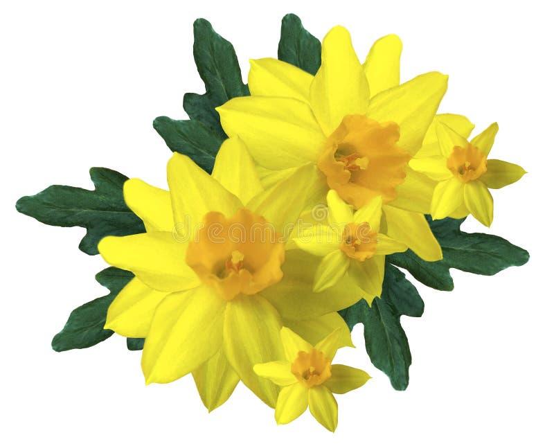 Geel boeket van gele narcissen op een witte geïsoleerde achtergrond Bloemenwaterverf Geen schaduwen stock afbeeldingen